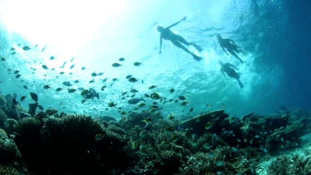 vídeos y material grabado en eventos de stock de arrecife de coral y peces con snorklers - tubo