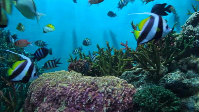 fish and coral. - akvarium byggnad för djur i fångenskap bildbanksvideor och videomaterial från bakom kulisserna