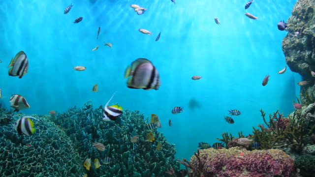 Fish and coral. Fish and coral. undersea stock videos & royalty-free footage