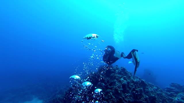 vidéos et rushes de poisson et plongeur - plongée sous marine