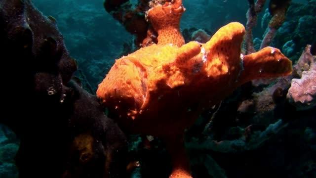 fish angler underwater on background of reflection sun seabed in maldives. - żabnicokształtne filmów i materiałów b-roll