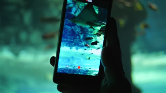 vídeos de stock e filmes b-roll de fish aquarium, man with mobile phone shoots video of swimming fish in large underwater tank - torpedo