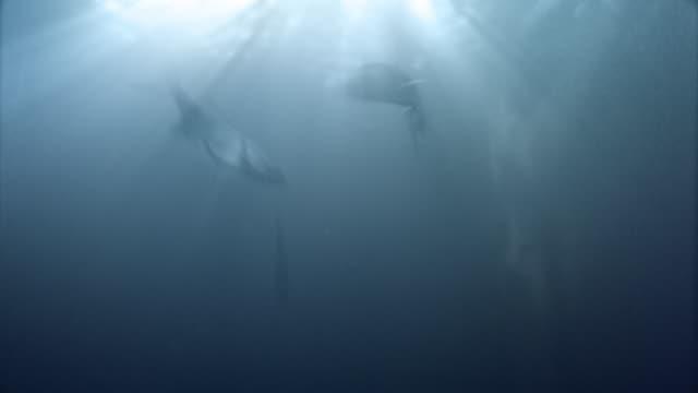 Fish Hintergrund LOOP – Video