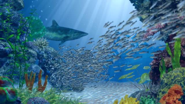 рыба приманки мяч и риф - кораблекрушение стоковые видео и кадры b-roll