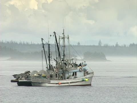 vídeos y material grabado en eventos de stock de pescado embarcaciones de anclaje - anclado