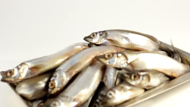fish capelin video