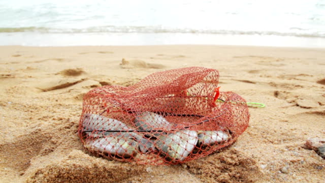 Fish caught in the net video