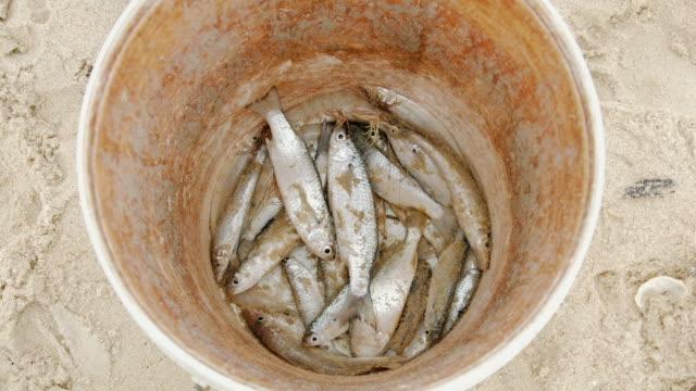Fish caught on the beach video