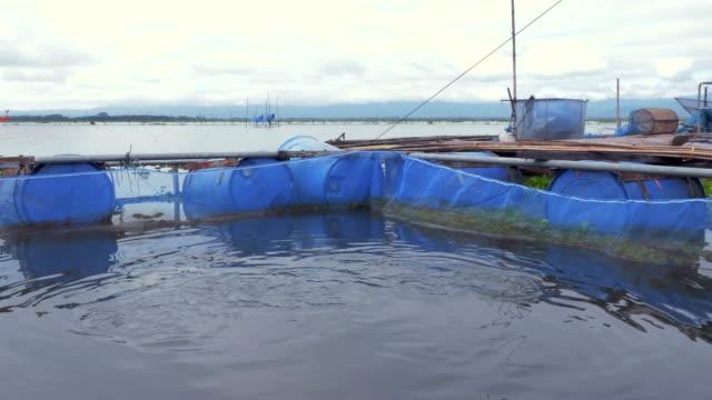 Fish farm in Kwan Phayao Lake,Thailand video