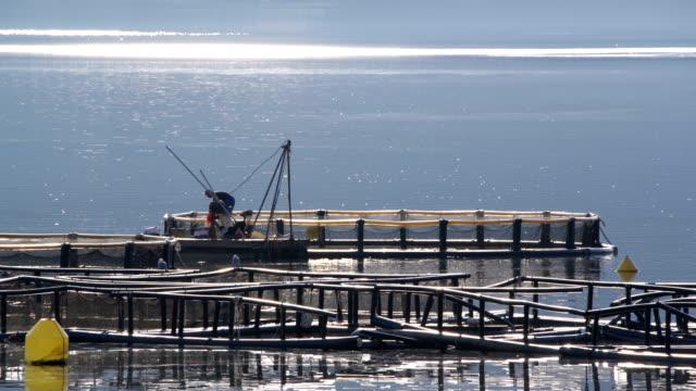 Fish farm in the Bay of Kotor video