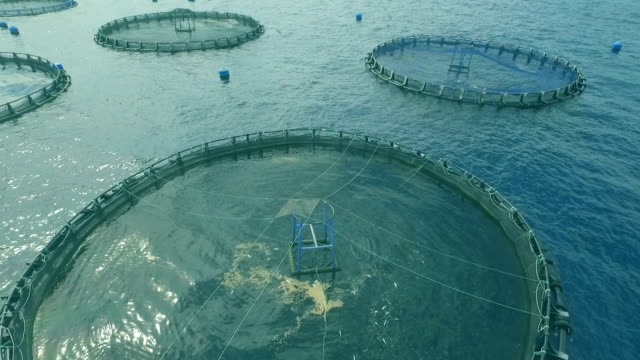vídeos de stock e filmes b-roll de fish farming cage systems - aquacultura