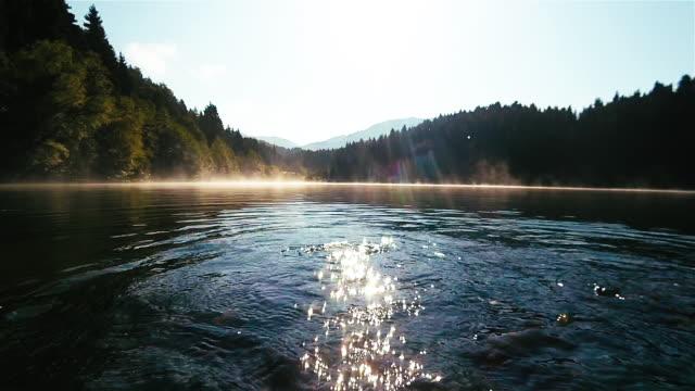 karmienie ryb w jeziorze şavşat karagöl w godzinach porannych - karp filmów i materiałów b-roll