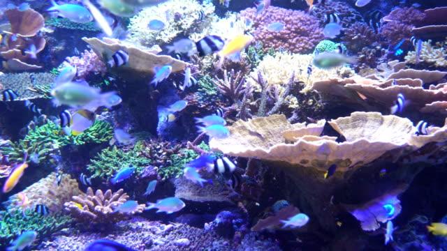 fisk är lever i coral som havet liv under bakgrundsbelysning - akvarium byggnad för djur i fångenskap bildbanksvideor och videomaterial från bakom kulisserna