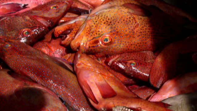 vídeos y material grabado en eventos de stock de en un mercado de pescado - zona pelágica