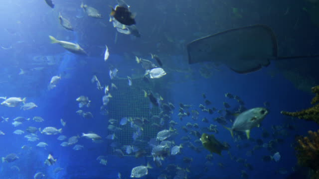 vídeos y material grabado en eventos de stock de pescado en acuario - organismo vivo