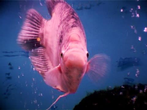 fische im aquarium  - aquarium oder zoo stock-videos und b-roll-filmmaterial