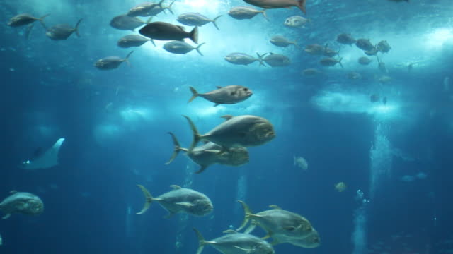 Fish in deep blue water影片