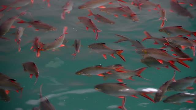 angeln im see - süßwasserfisch stock-videos und b-roll-filmmaterial