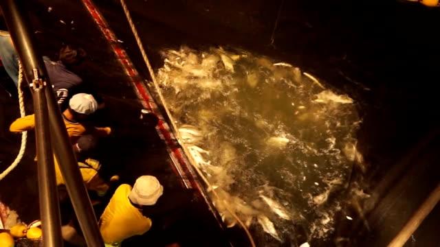 Fish in trawl video