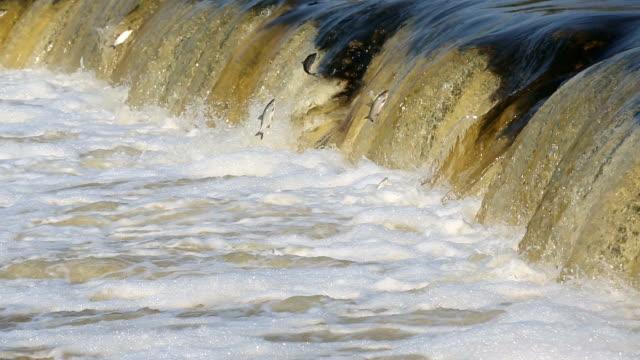 vídeos de stock, filmes e b-roll de cachoeira salto de peixe - países bálticos