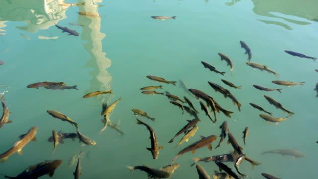 魚湖(balikli gol )、シャンルウルファ,turkey - アナトリア点の映像素材/bロール