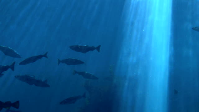 魚・海洋生物・水中 - 大西洋点の映像素材/bロール