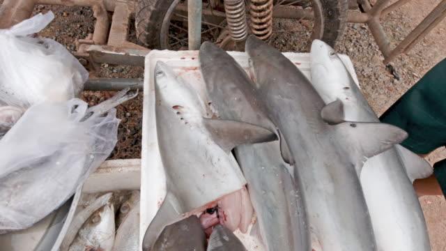 Fischmarkt verkauft bedrohte Arten Blacktip Reef Sharks Umweltprobleme – Video
