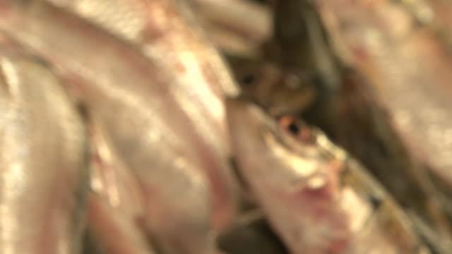 fischmarkt - ichthyologie stock-videos und b-roll-filmmaterial