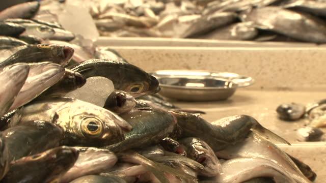 fiskmarknaden - iktyologi bildbanksvideor och videomaterial från bakom kulisserna