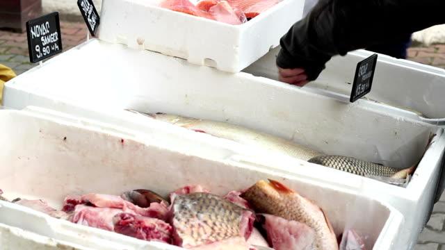 ryba w stragany na rynku, - spoiler filmów i materiałów b-roll