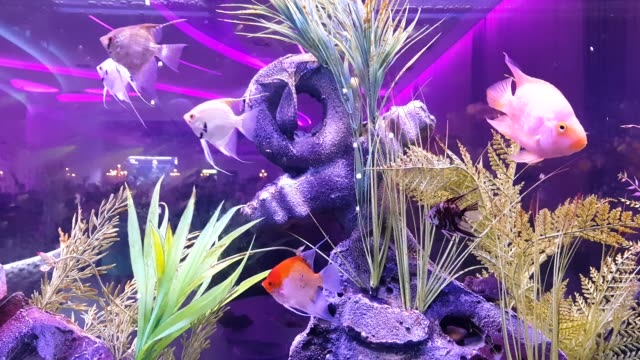 Fish on the large Aquarium
