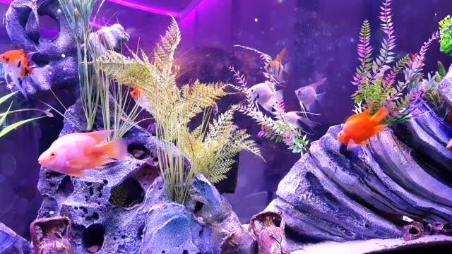 fish on the large aquarium - морская рыба стоковые видео и кадры b-roll