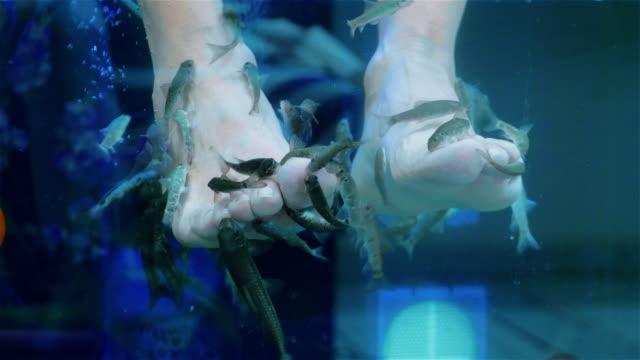 fish pedicure by garra rufa fishes in 4k slow motion 60fps - pedicure filmów i materiałów b-roll