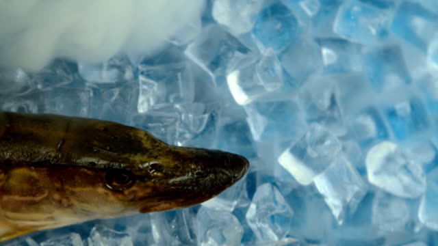 Fish pike in the ice on the turntable. video