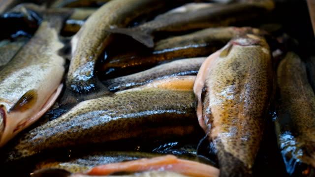 烹調準備的魚 - future 個影片檔及 b 捲影像