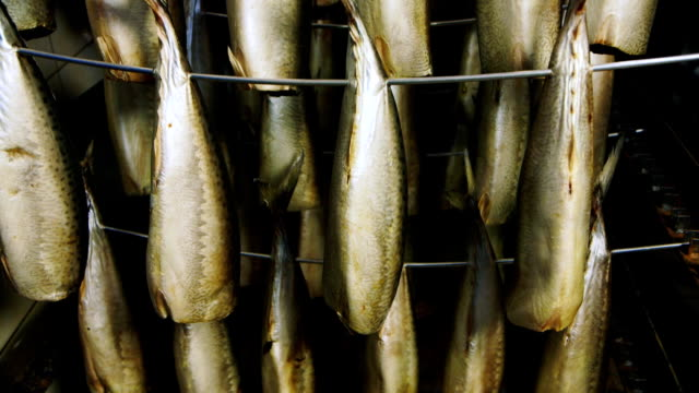 Fish prepared for smoking in stock video