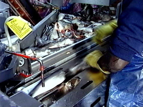 Fish Processing video