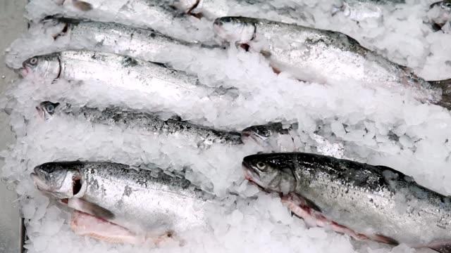 fisklaxöring på is, försäljning av fryst fisk på en stormarknad för livsmedel - fisk och skaldjur bildbanksvideor och videomaterial från bakom kulisserna