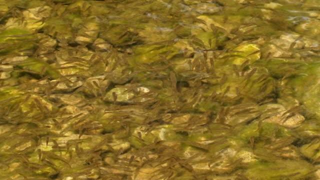 fisch shoal - ichthyologie stock-videos und b-roll-filmmaterial