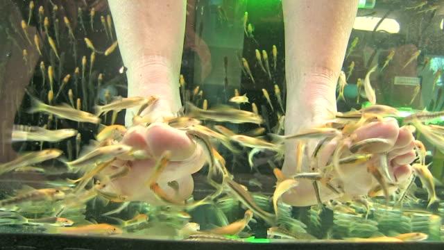 Fisch-Spa-Pediküre von Rufa, Thailand – Video