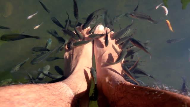 fish spa pedicure - pedicure filmów i materiałów b-roll