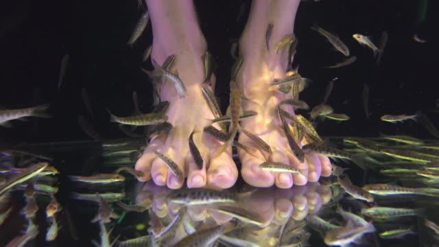 Fish Spa – Video