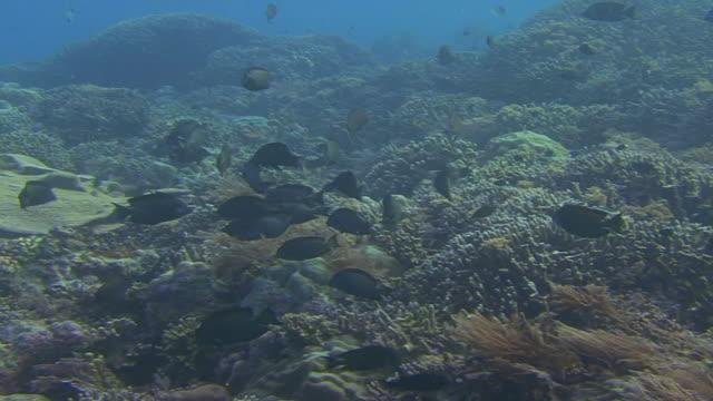 fische laichen - laichen stock-videos und b-roll-filmmaterial