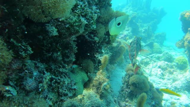 stockvideo's en b-roll-footage met vissen die rond koraalrif in turken en caicos zwemmen - providenciales