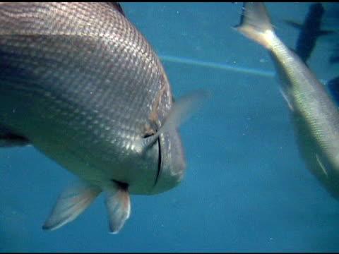 fische schwimmen in acuarium - aquarium oder zoo stock-videos und b-roll-filmmaterial