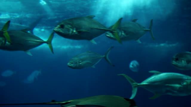fish swimming in aquarium - akvarium byggnad för djur i fångenskap bildbanksvideor och videomaterial från bakom kulisserna