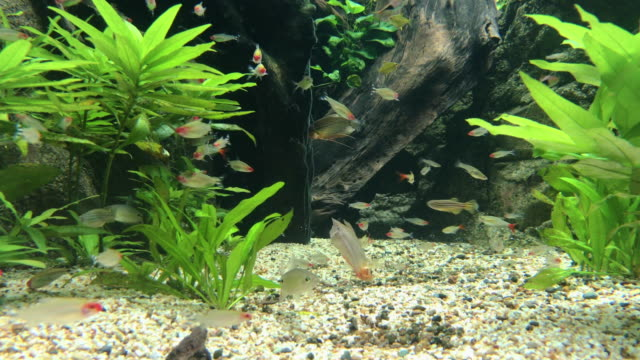 fish swimming in the water searching for food fish swimming in the water searching for food freshwater stock videos & royalty-free footage