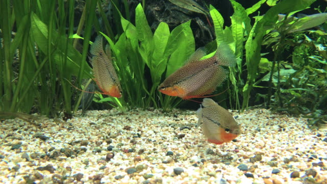 fish swimming in the water searching for food - glony filmów i materiałów b-roll