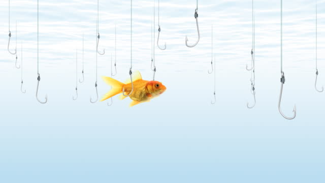 fische schwimmen in der nähe von fischen haken - angelhaken stock-videos und b-roll-filmmaterial