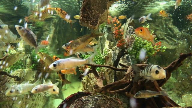 vídeos de stock e filmes b-roll de fish tank water - aquário edifício para cativeiro animal